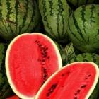 Perfumer's Apprentice Aroma Watermelon (Anguria) 10ml
